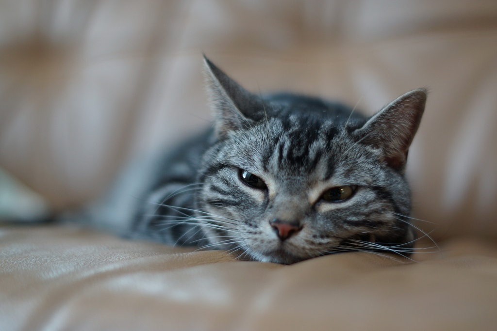 cat-hotel-sitting-and-grooming-services-in-singapore
