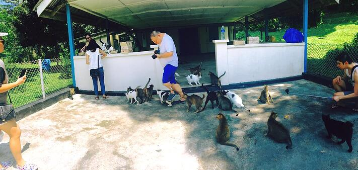 cat-caregivers-in-singapore.jpg