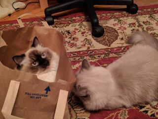 cats-in-halloween-costumes-cat-in-a-bag.jpg