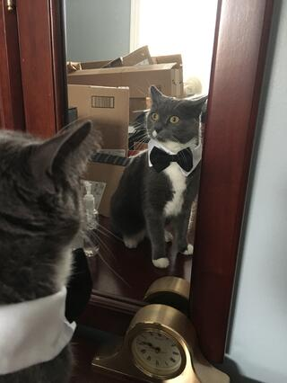 cats-in-halloween-costumes-tuxedo-cat.jpg