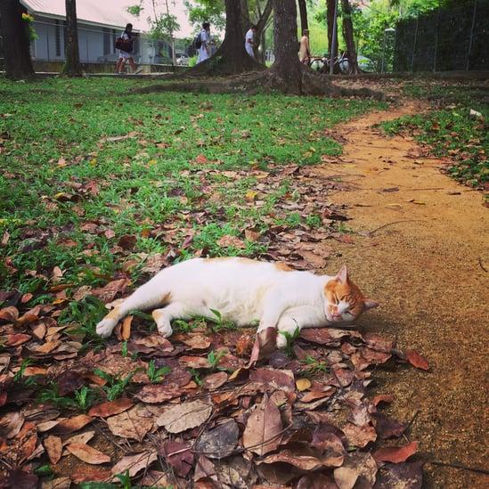 caturday-all-day.jpg