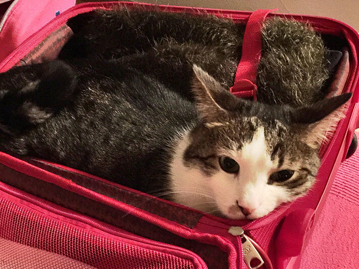 how-to-travel-with-your-cat-overseas-like-a-pro.jpg