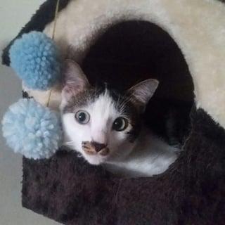remy-cat-house.jpg